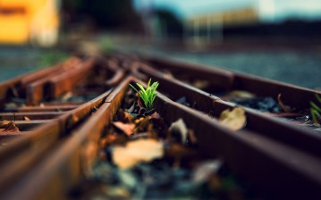Tree, life, train rail обои